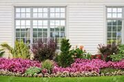 11930062-Flowerbed-of-colorful-flowers-against-wall-with-windows-Stock-Photo